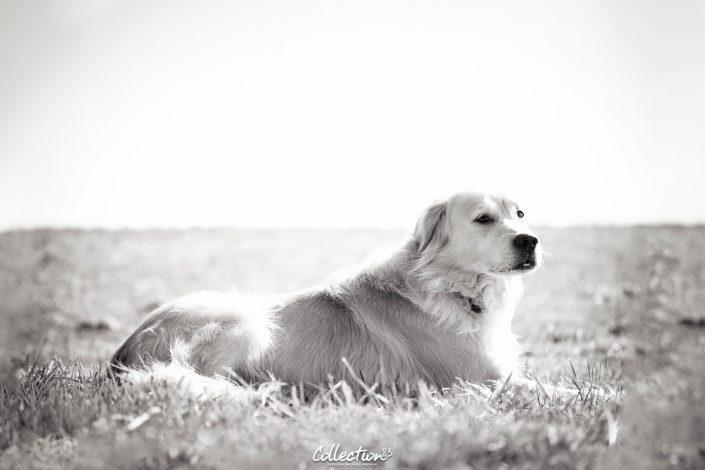 Hunde & Pferde Fotografie