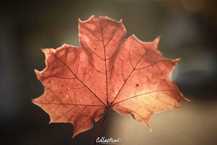 Herbst Foto im Detail fotografiert von Collection83 Fotograf Michael Hausner in Pfaffenhofen an der Ilm